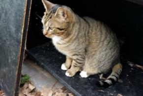 Disappearance alert Cat Européen Male , 6 years Mennecy France