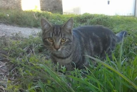 Disappearance alert Cat Male , 3 years Saint-Just-d'Ardèche France