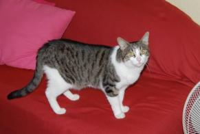 Disappearance alert Cat Female , 18 years Dompierre-les-Ormes France