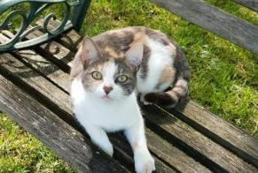 Disappearance alert Cat Female , 5 years Neuvicq-le-Château France