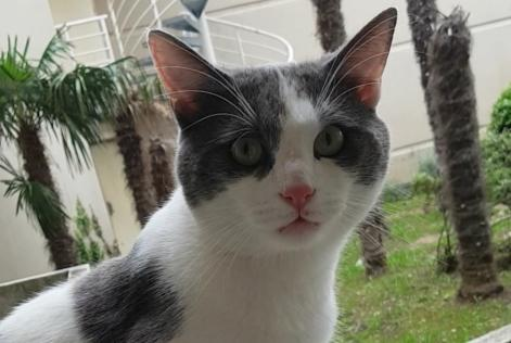 Discovery alert Cat Male , 2 years Marseille France