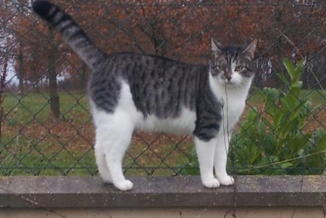 Disappearance alert Cat  Male , 6 years Dordives France