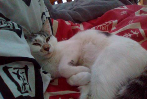 Disappearance alert Cat Female , 2 years Poitiers France