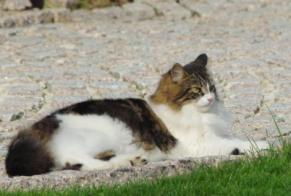 Disappearance alert Cat Male , 5 years Guichainville France