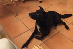 Disappearance alert Dog miscegenation Male , 7 years Payrin-Augmontel France