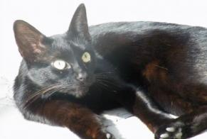 Disappearance alert Cat  Male , 10 years Tremblay-en-France France