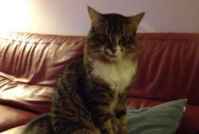 Disappearance alert Cat  Male , 6 years Crosmières France