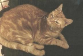 Disappearance alert Cat Female , 3 years Saint-Germain France