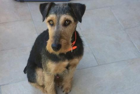 Disappearance alert Dog  Male , 4 years Séez France