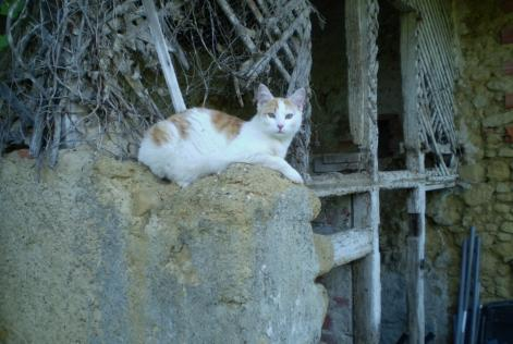 Disappearance alert Cat Male , 3 years Marciac France
