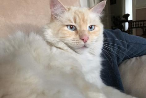 Disappearance alert Cat Male , 5 years Ville-di-Pietrabugno France