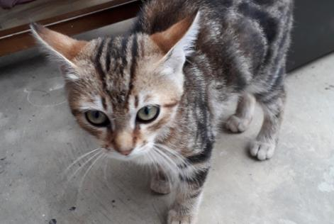 Discovery alert Cat Male , Between 4 and 6 months Talloires-Montmin France