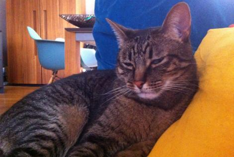 Disappearance alert Cat  Male , 5 years Annecy France