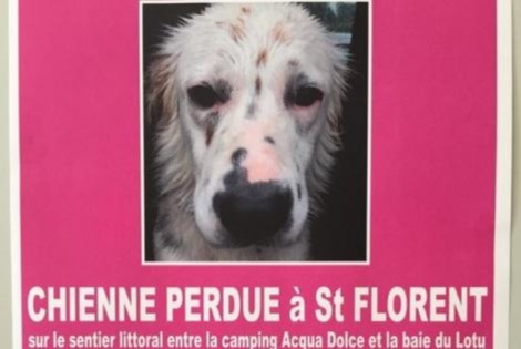 Disappearance alert Dog miscegenation Female , 3 years Saint-Florent France