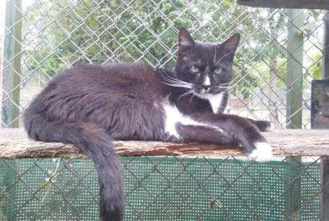 Disappearance alert Cat  Male , 5 years Villers-le-Lac France