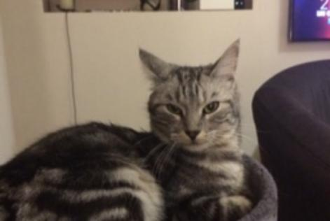 Disappearance alert Cat Female , 3 years Nargis France