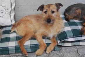 Disappearance alert Dog miscegenation Male , 11 years Kunheim France