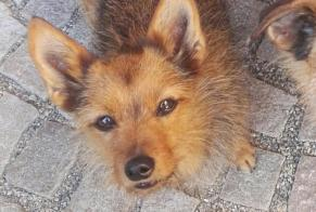 Disappearance alert Dog miscegenation Female , 14 years Kunheim France