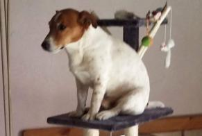 Disappearance alert Dog  Male , 14 years Mézilles France