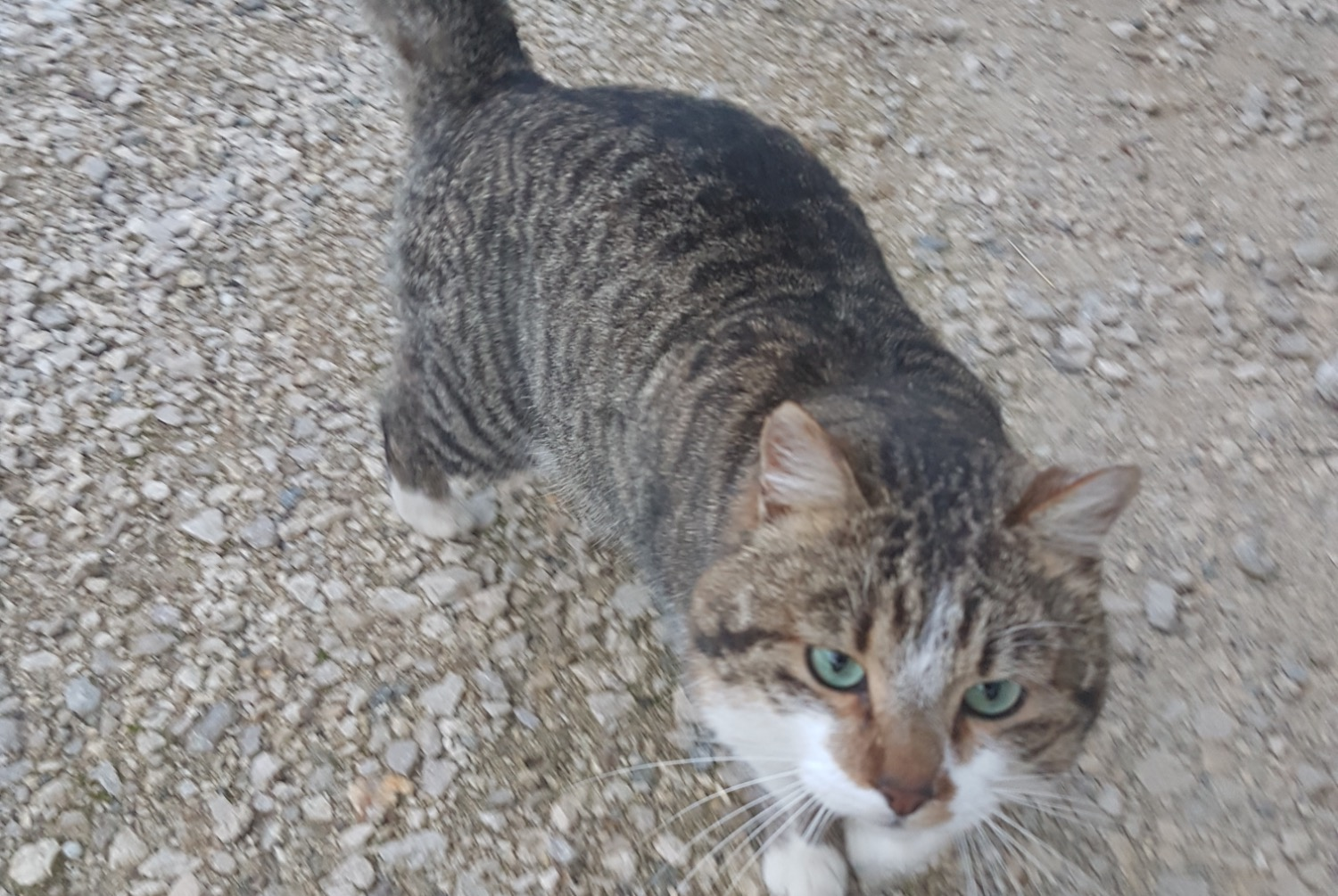 Discovery alert Cat Male , 2 years Fillière France