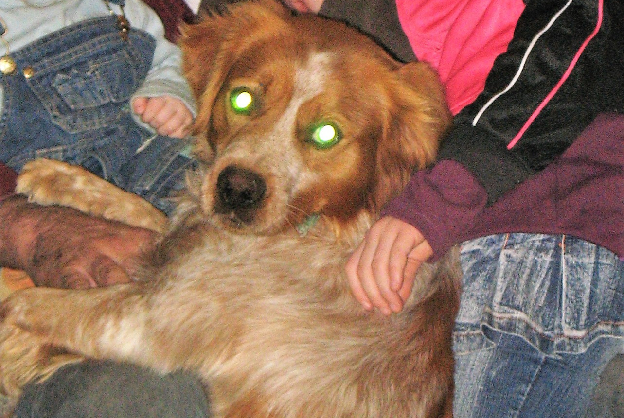 Disappearance alert Dog  Male , 12 years Grane France