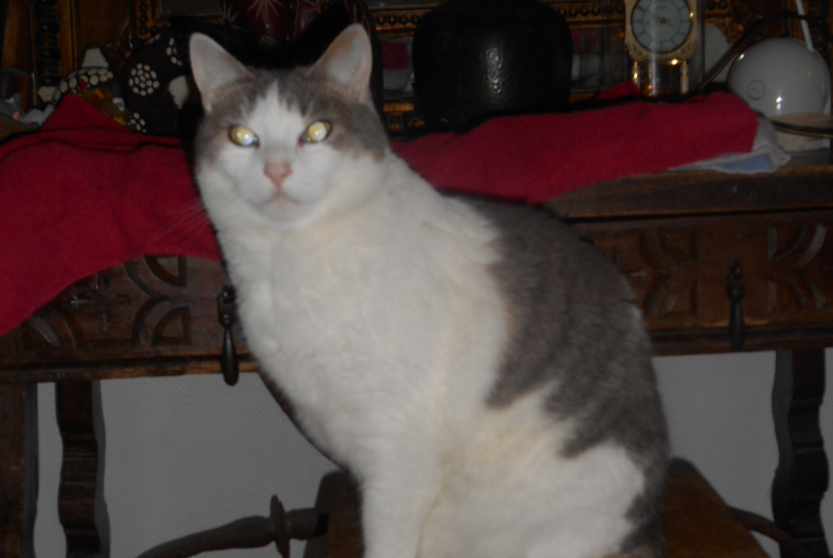 Disappearance alert Cat  Female , 9 years Caen France