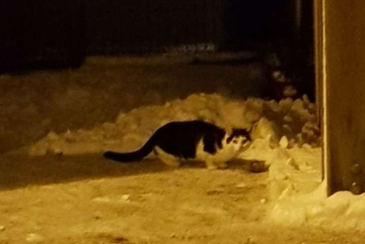 Discovery alert Cat Unknown , 2 years Remiremont France