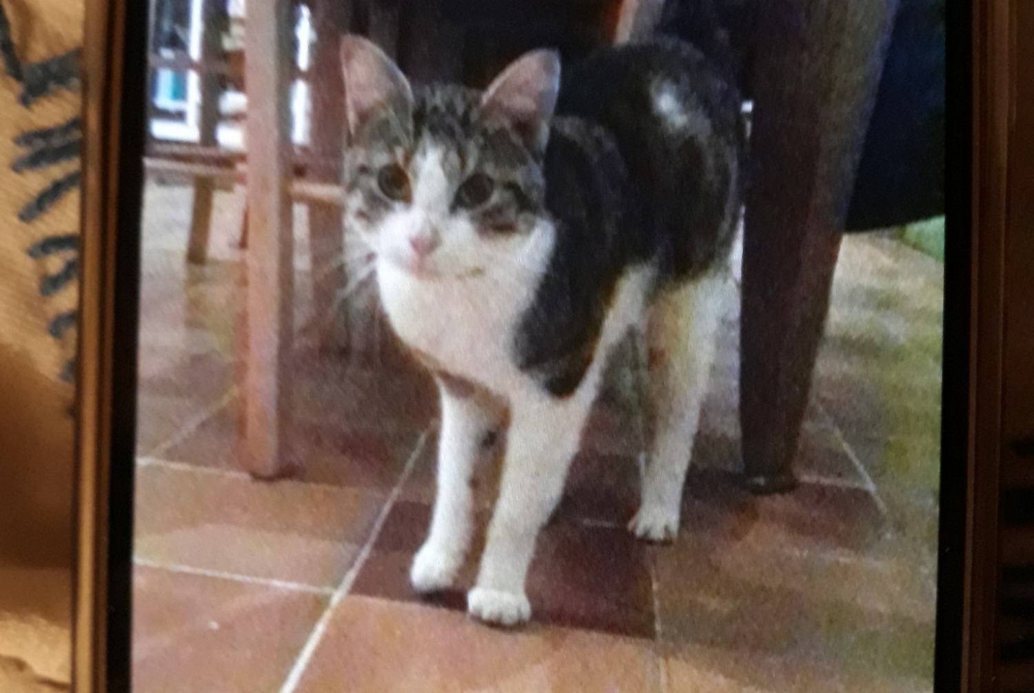 Discovery alert Cat Male , Between 9 and 12 months Armes France