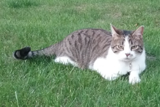 Disappearance alert Cat Male , 2 years Auxonne France