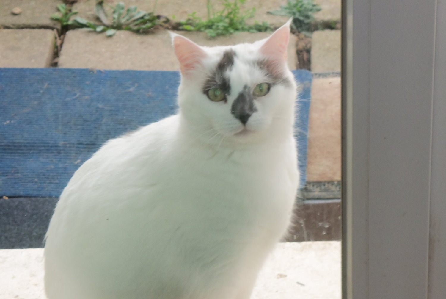 Disappearance alert Cat  Female , 14 years Corbeil-Essonnes France