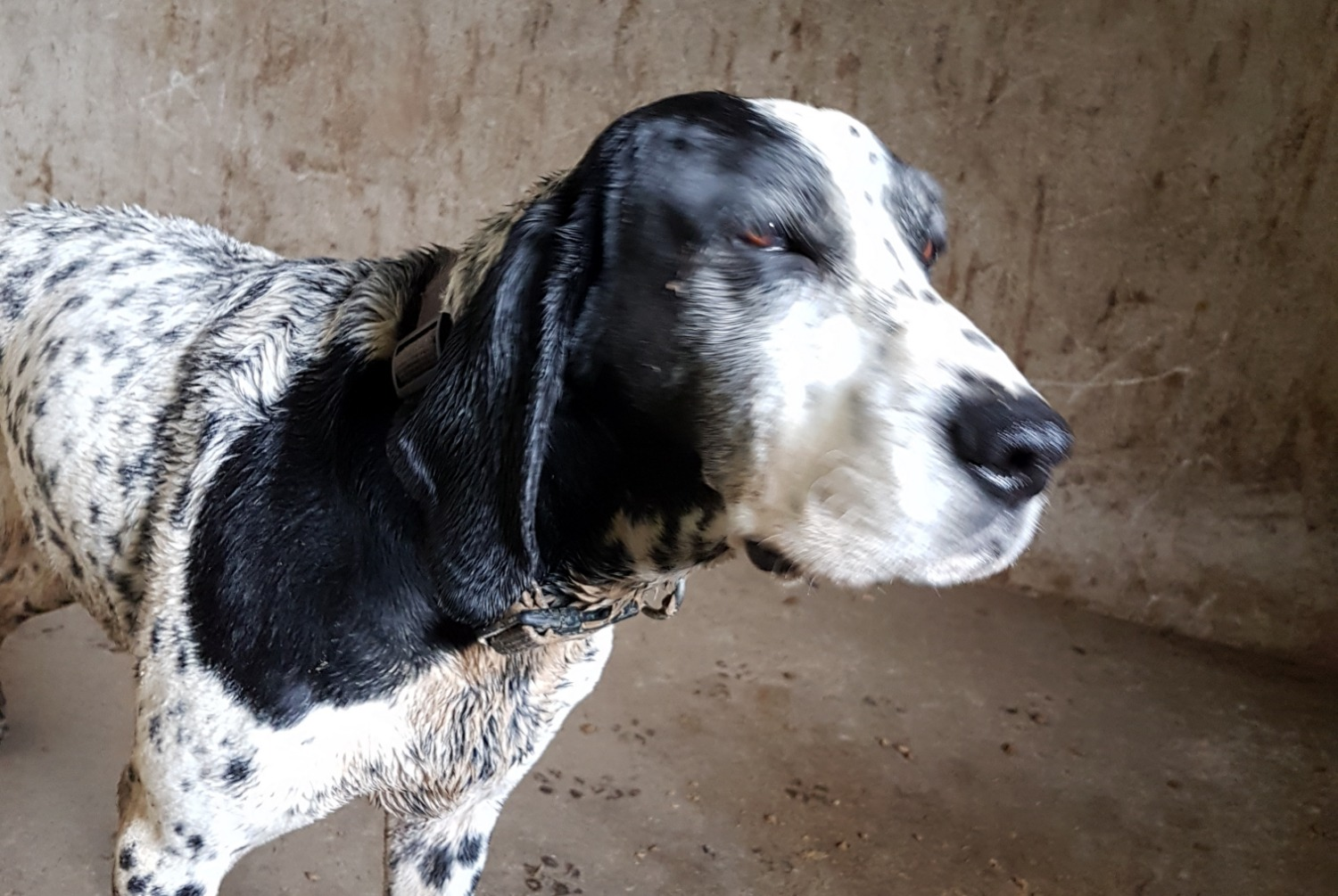 Discovery alert Dog Female , 10 years Vallangoujard France