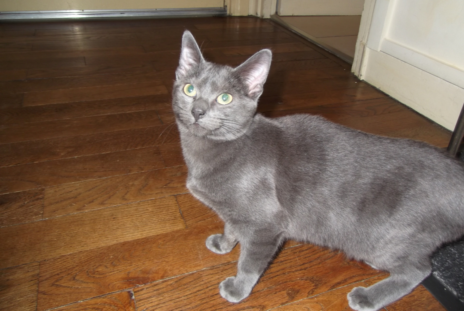 Discovery alert Cat Female , Between 4 and 6 months Caen France