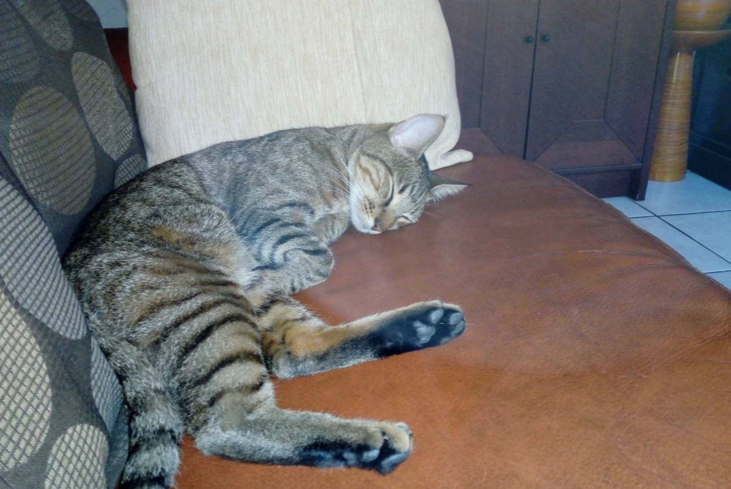 Disappearance alert Cat Male , 2 years Marseille 8e Arrondissement France