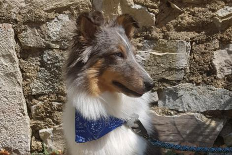 Disappearance alert Dog  Female , 1 years Sans Souci France