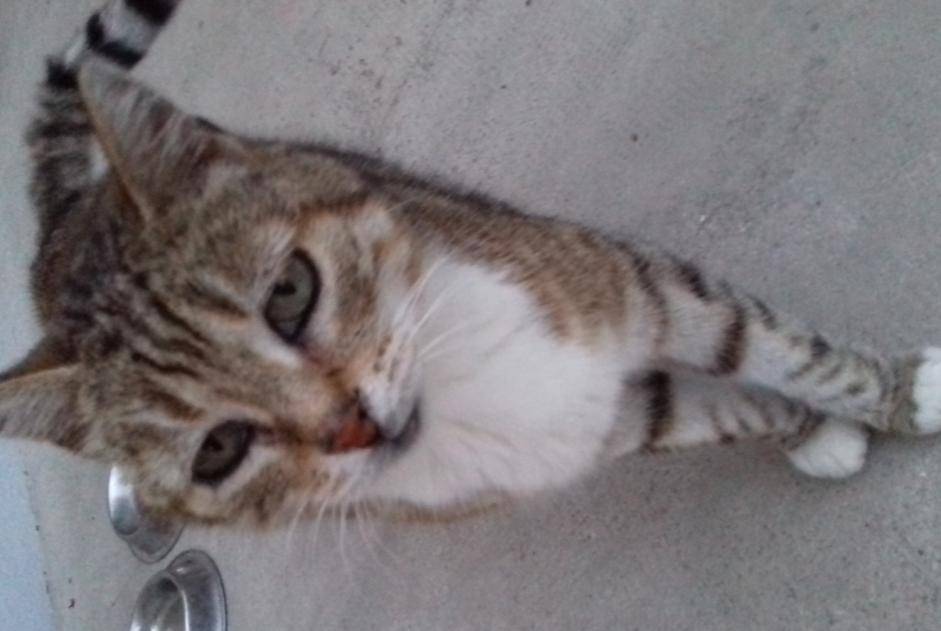 Disappearance alert Cat  Male , 14 years Romilly-sur-Seine France