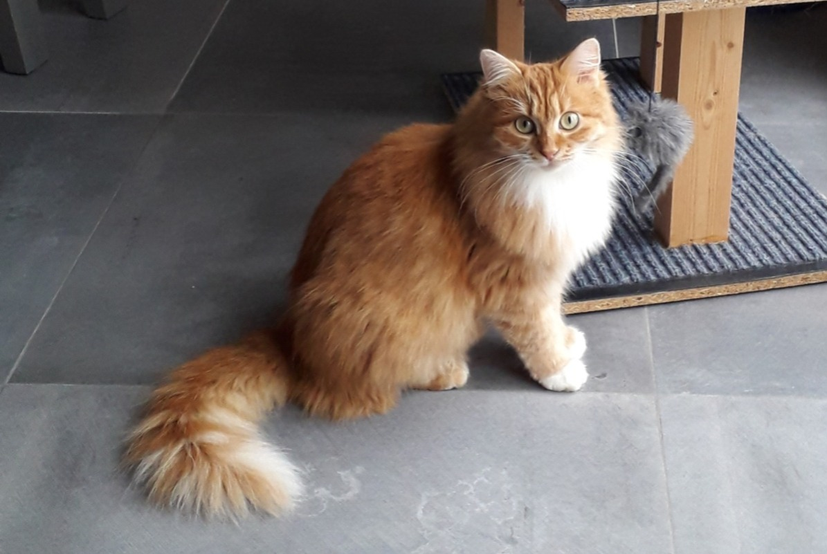 Disappearance alert Cat  Female , 2 years La Villedieu-du-Clain France