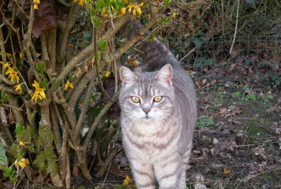 Disappearance alert Cat Male , 9 years Prunay-le-Gillon France