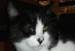 Disappearance alert Cat Male , 10 years Mer France
