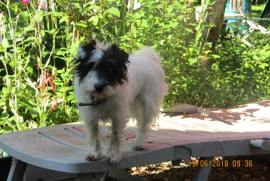 Disappearance alert Dog Female , 3 years Le Fossat France