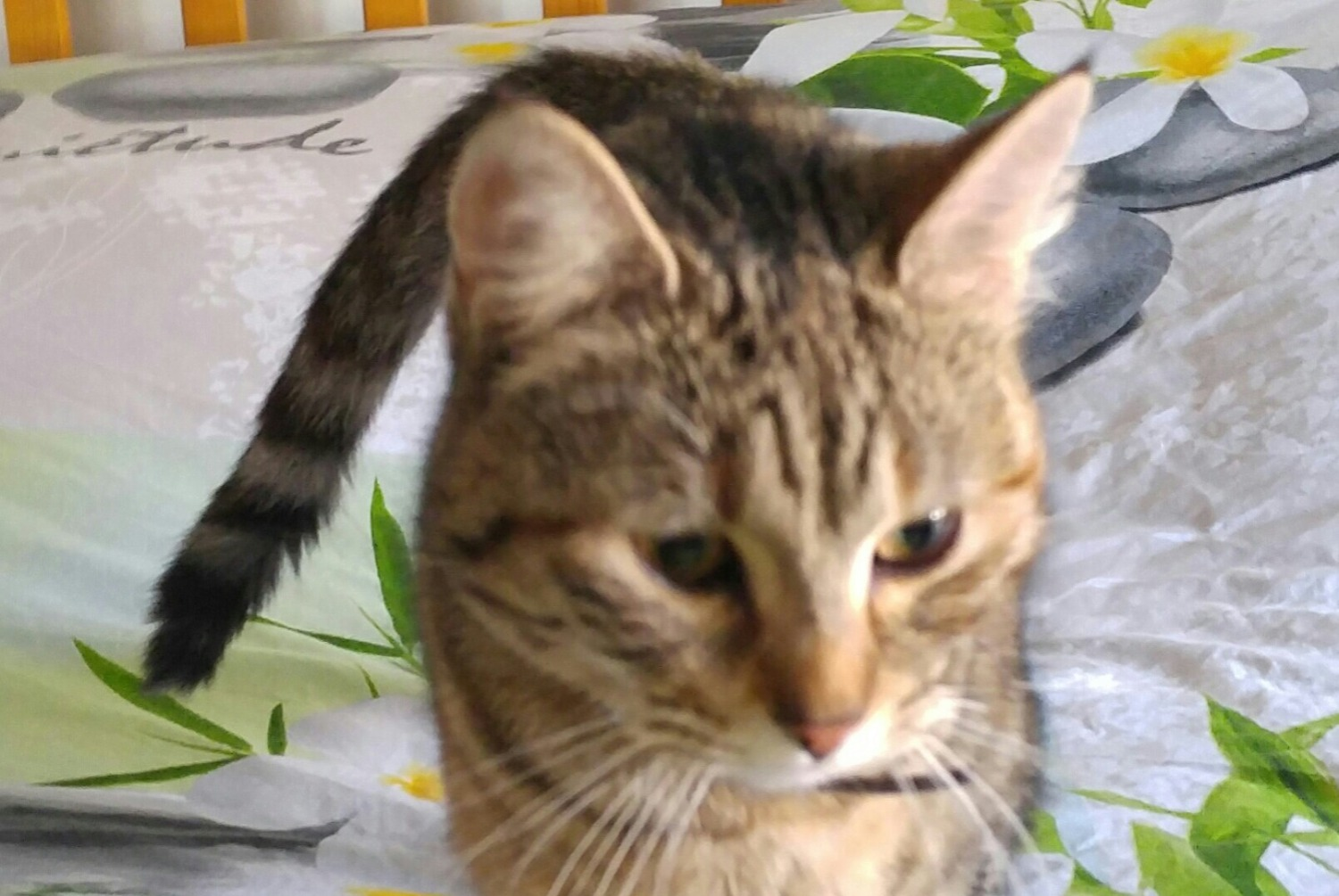 Discovery alert Cat Female , 2 years Marcelcave France