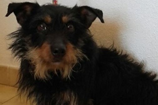 Discovery alert Dog Male , 2 years Coquelles France