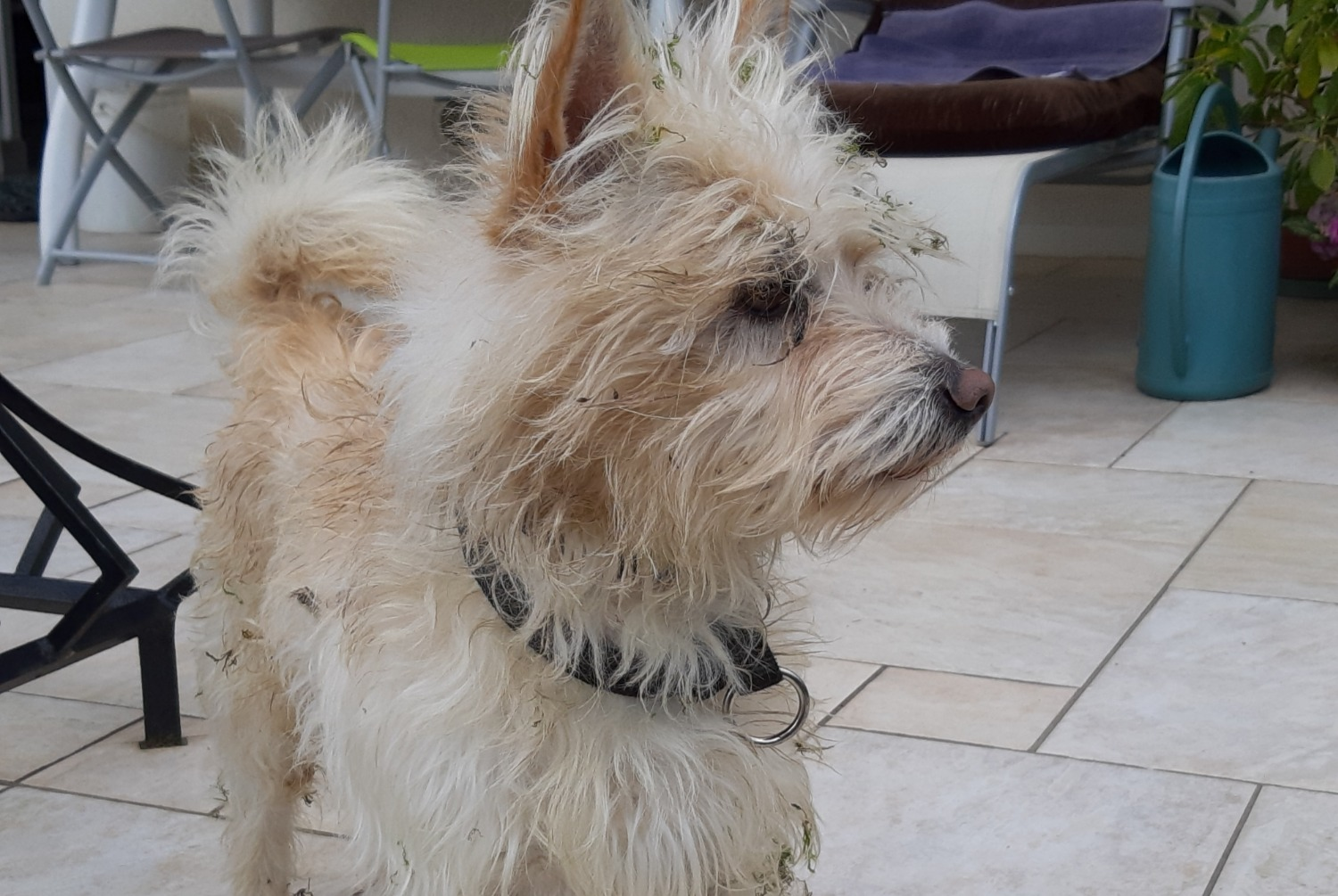 Discovery alert Dog Male , 6 years Buchères France