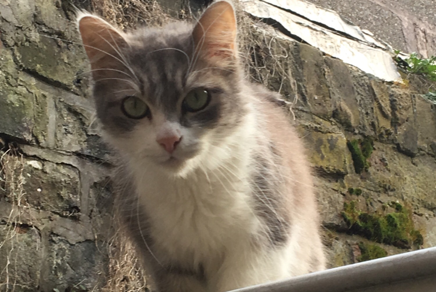 Discovery alert Cat Unknown , 1 year Amiens France