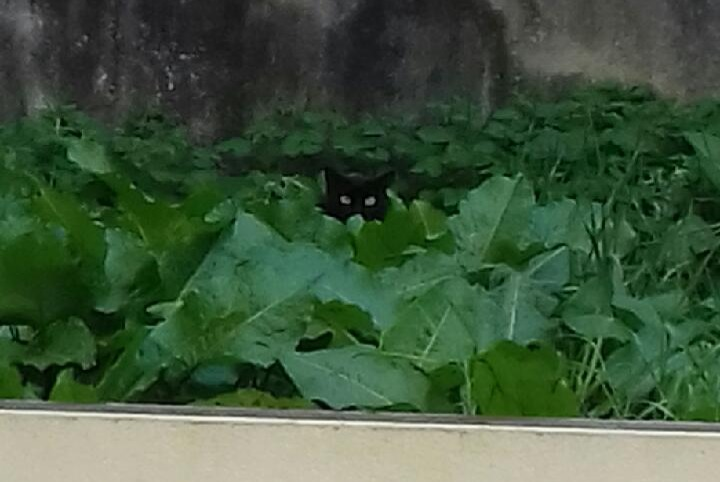 Discovery alert Cat Unknown , 3 years Angoulême France