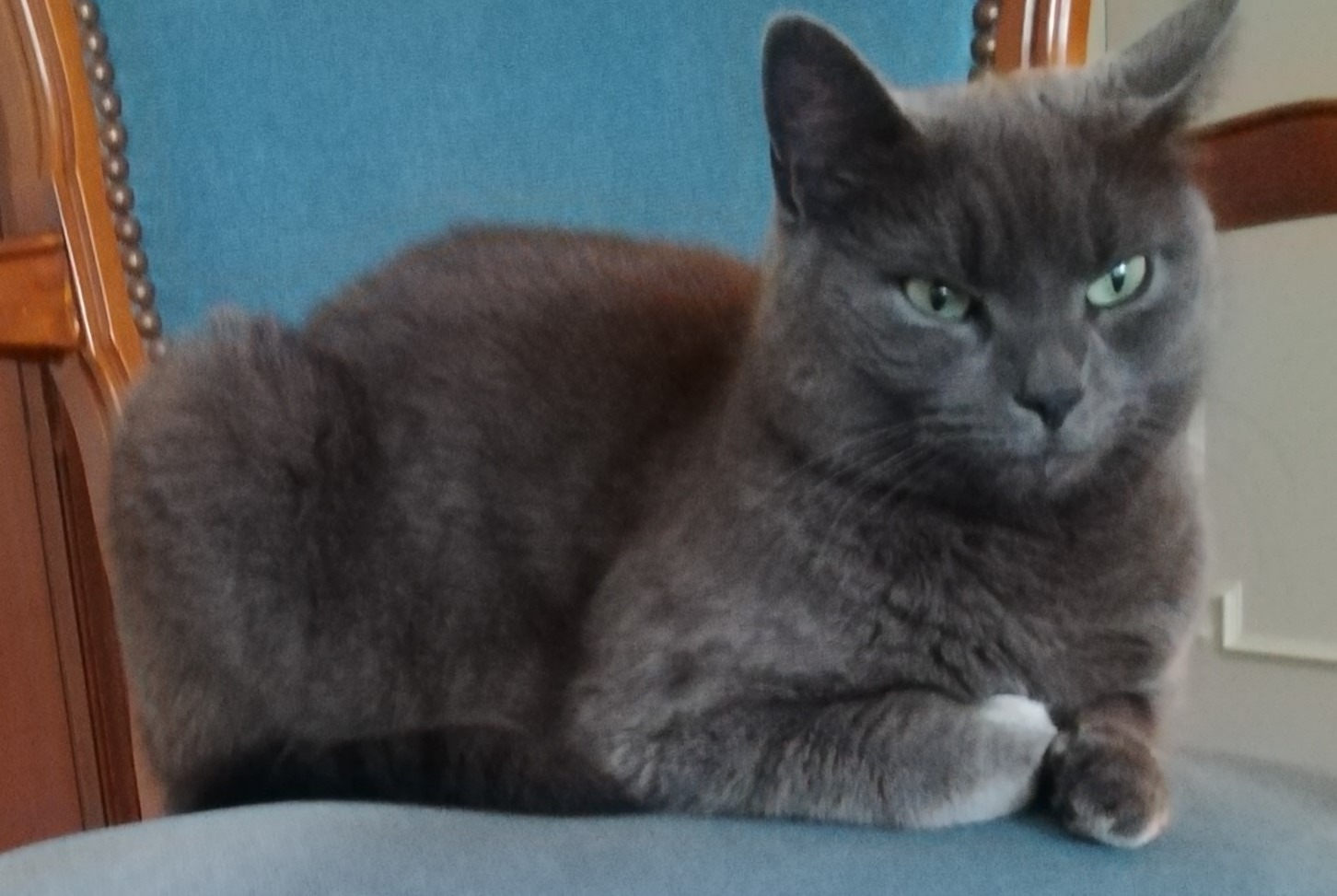Discovery alert Cat  Male , 2 years Soyaux France