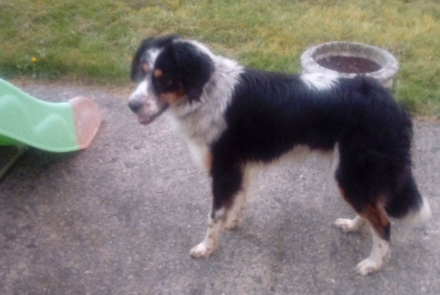 Discovery alert Dog Female , 2 years Baud France