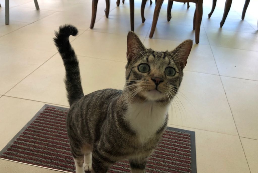 Disappearance alert Cat  Male , 2 years Aix-en-Provence France