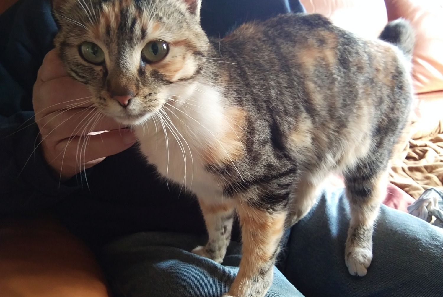 Discovery alert Cat Female , Between 9 and 12 months Loire-Authion France