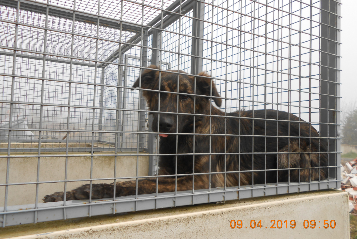 Discovery alert Dog miscegenation Female , Between 7 and 9 months La Trimouille France