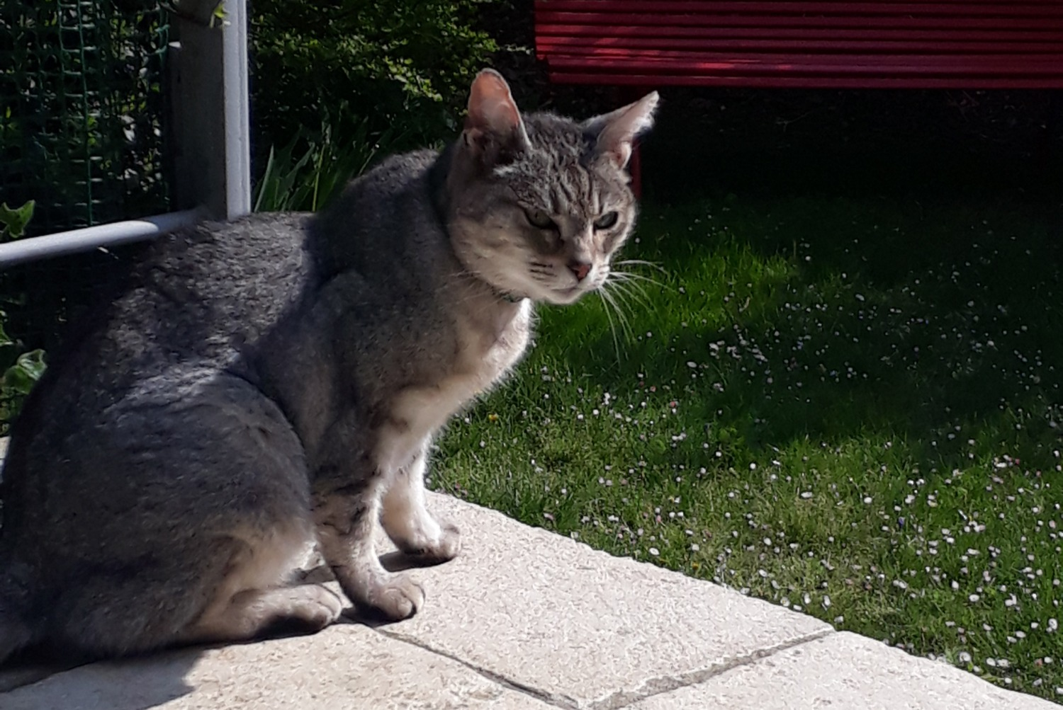 Discovery alert Cat Female , 1 year Saint-Cloud France